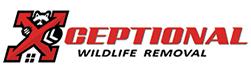 Covington Wildlife Removal